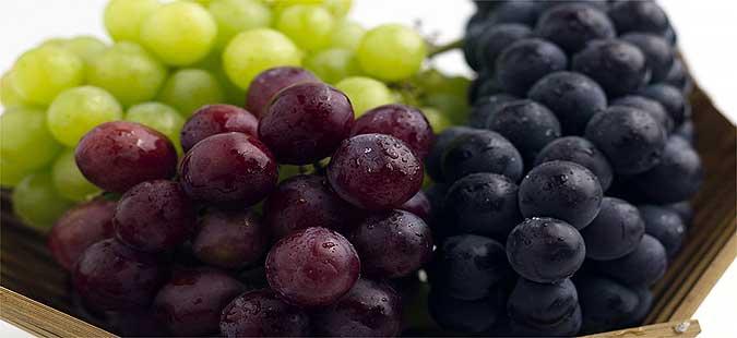 Photo of Винариите го откупуваат грозјето во Повардарието – Лозарите ја добиваат првата рата