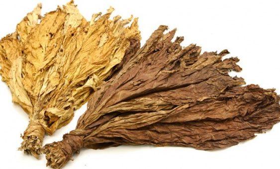 Во Василево откупени 150 тони тутун, просечната цена 210 денари