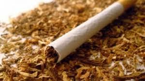За дваесетина дена откупени над 6.000 тони тутун, просечната цена 190 денари