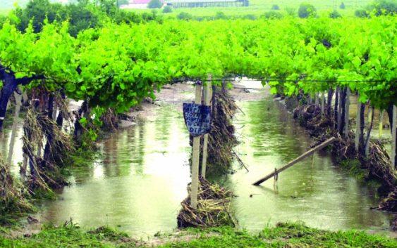 Забавување на порастот на осигурување на земјоделските посеви и култури