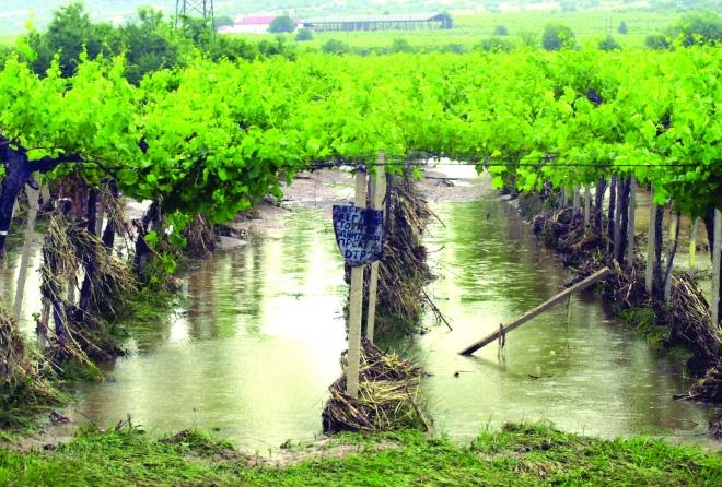 Photo of Забавување на порастот на осигурување на земјоделските посеви и култури
