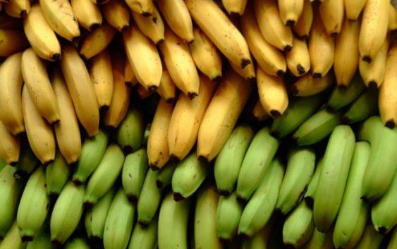 Јадете банани додека уште ги има!