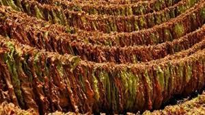 Photo of Над 30 тони тутун во велешко остана непродаден