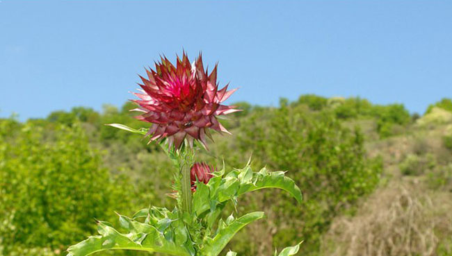 Photo of Од извоз на лековити билки Албанија годишно заработува 28 милиони долари