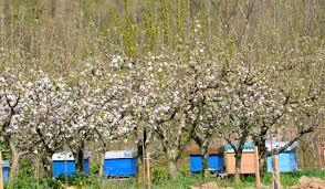 Органско Пчеларство-можности и перспективи