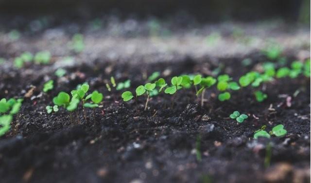 Photo of Оваа билка гарантира профит: Лесно се одгледува, а уште полесно се продава!