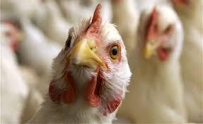 Photo of Во Хрватска е регистриран птичји грип