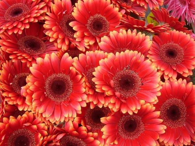 Photo of Најголем увозник на цвеќе е Германија, а најголем извозник Холандија