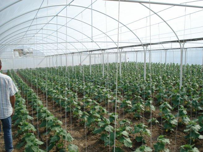 Photo of Градинарите ќе можат да изградат нови оранжерии со европски пари