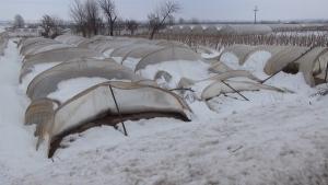 Photo of Земјоделците со уништени оранжерии чекаат помош од владата