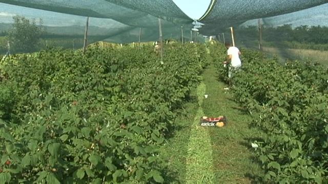Photo of Двојно повисоки субвенции за органско производство