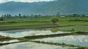 Photo of Оризопроизводителите чекаат нова влада за да има со кого да преговараат за откупните цени
