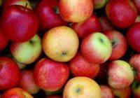 И покрај субвенциите производството паѓа- драстичен пад на родот на краставици, , домати, јаболка и сливи