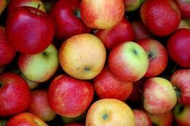 Photo of И покрај субвенциите производството паѓа- драстичен пад на родот на краставици, , домати, јаболка и сливи