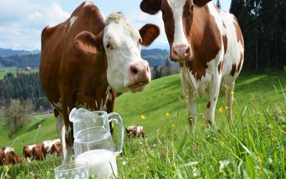Добиточното производство и бројот на добиток и живина низ бројки за 2016-та