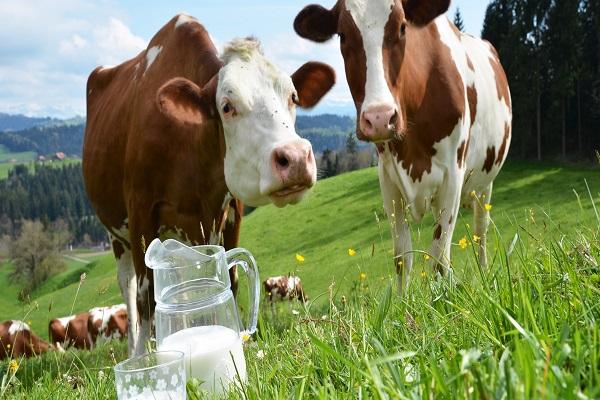 Photo of Добиточното производство и бројот на добиток и живина низ бројки за 2016-та