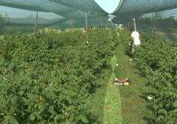 Дозволени пестициди во органското производство