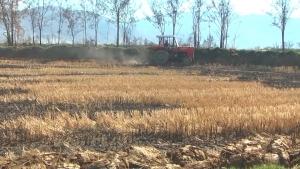 Кочанските земјоделци не сеат ориз, незадоволни се од цената