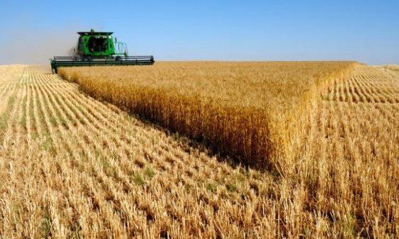 Индексот на цените на храната на ФАО порасна заради високата цена на пченицата