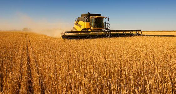 Зголемување на производството кај крмната пченка за 61.4%