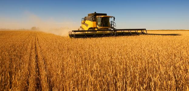 Photo of Зголемување на производството кај крмната пченка за 61.4%