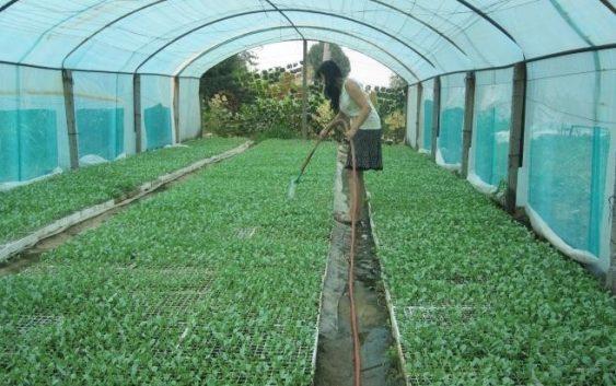 Растителното производство во земјава се зголемило
