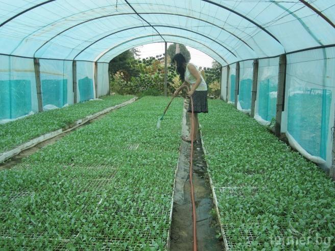 Photo of Растителното производство во земјава се зголемило