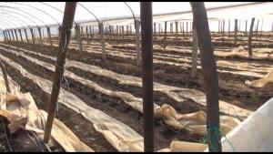 Земјоделците бараат исплата на субвенции