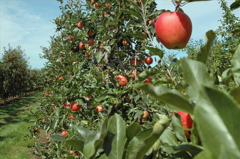 Photo of Измрзнаа јаболката, тутунот, лозјето- земјоделците и без род и без субвенции