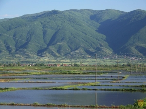 Photo of Помалку површини ќе се засеат со ориз во кочанско поради лошата хидролошка состојба