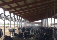 Ублажување на влијанието на високите температури во производството на млеко