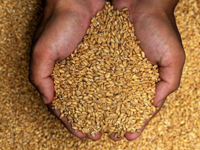 Photo of Светот има резерви на пченица за четири месеци