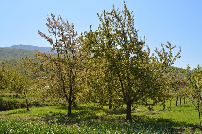 Photo of Земјоделците од Дебрца штетите на насадите да ги пријавуваат во канцеларијата во Охрид