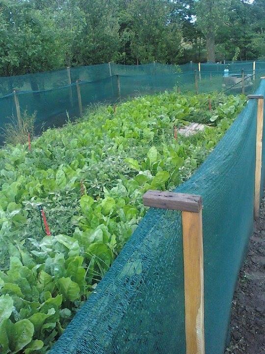 Photo of АГРО БИЗНИС: Фарма со полжави со правилно одгледување може да донесе добра заработка