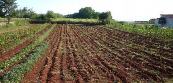 Photo of Индексот на цените во земјоделството кај инпутот е зголемен за 3.6%, а кај аутпутот зголемувањето изнесува 4.2%