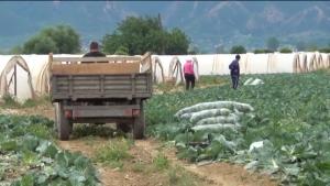 Photo of Земјоделците излегуваат на протест, се жалат и на притисоци