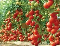 Photo of Органското производство може да биде профитабилен агробизнис