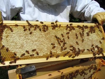 Photo of Како до повеќе мед?