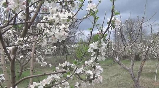 Photo of Во Росоман поднесени 750 барања за надоместок на штети од пролетниот мраз