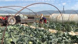 Photo of Струмичките земјоделци бараат итна исплата на сите субвенции