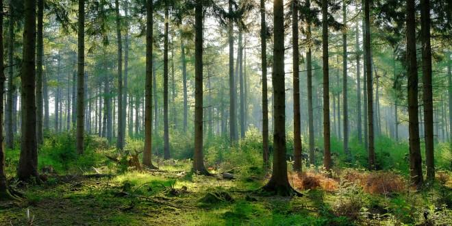 Photo of Вкупното производство на шумски производи во државните шуми намалено за 45.8%