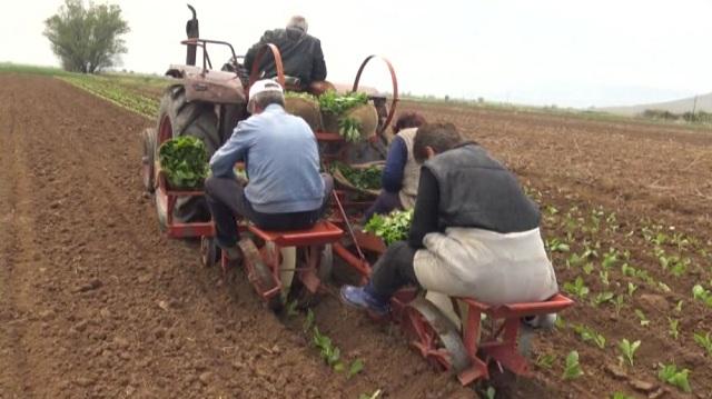 Photo of Почна новата реколта, се чекаат субвенциите