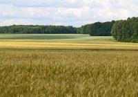 Врнежите поволни за поледелските култури