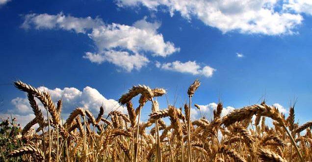 Photo of Заврши проектот за адаптација на земјоделството кон климатските промени