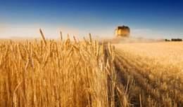 Photo of Сушниот период му наштети на житото во Пелагонија