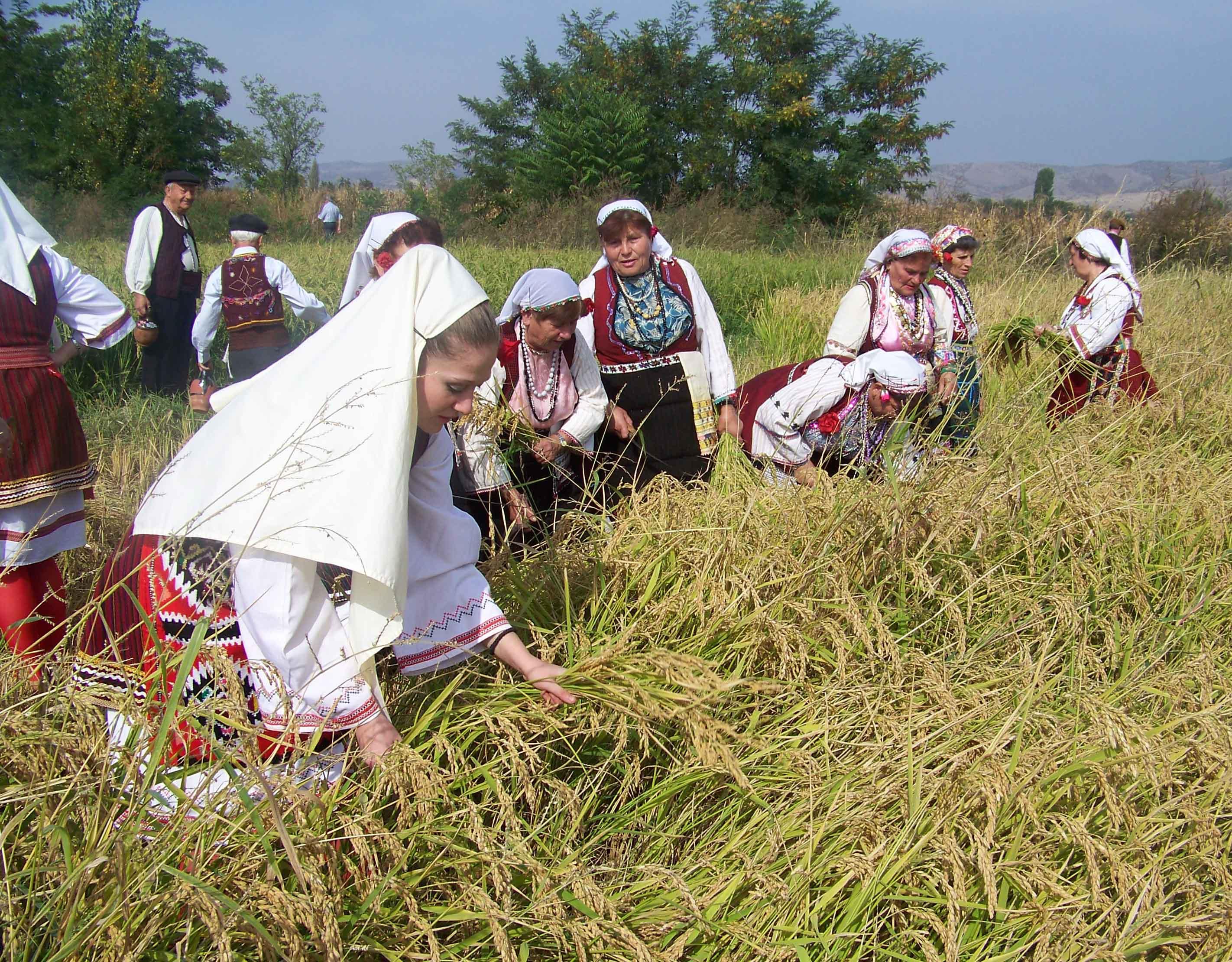 Photo of Ќе има ли пченица за жнеење- земјоделците прогнозираат катастрофални приноси