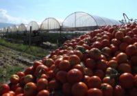 Струмичките земјоделци реагираат на ниските откупни цени