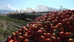 Photo of Струмичките земјоделци реагираат на ниските откупни цени