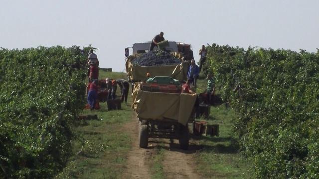 Photo of Исплата на винското грозје