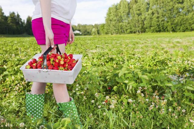 Photo of Кај соседите ова овошје сега е најисплатлив бизнис